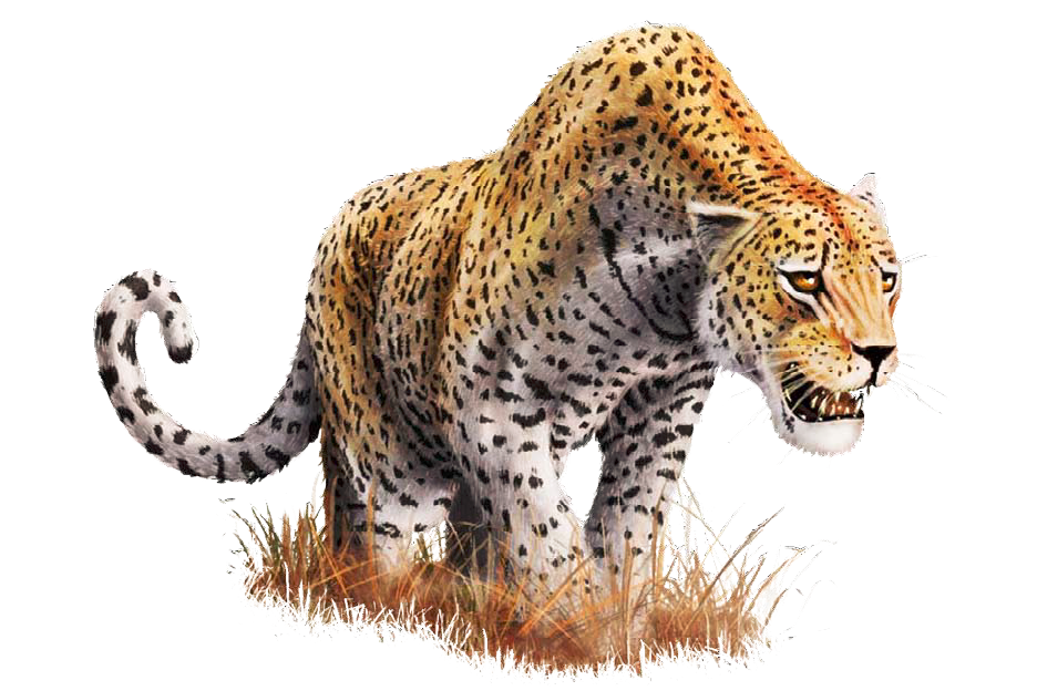 Cat%2C%20Leopard.png